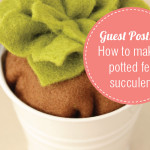 How to Make a Potted Succulent